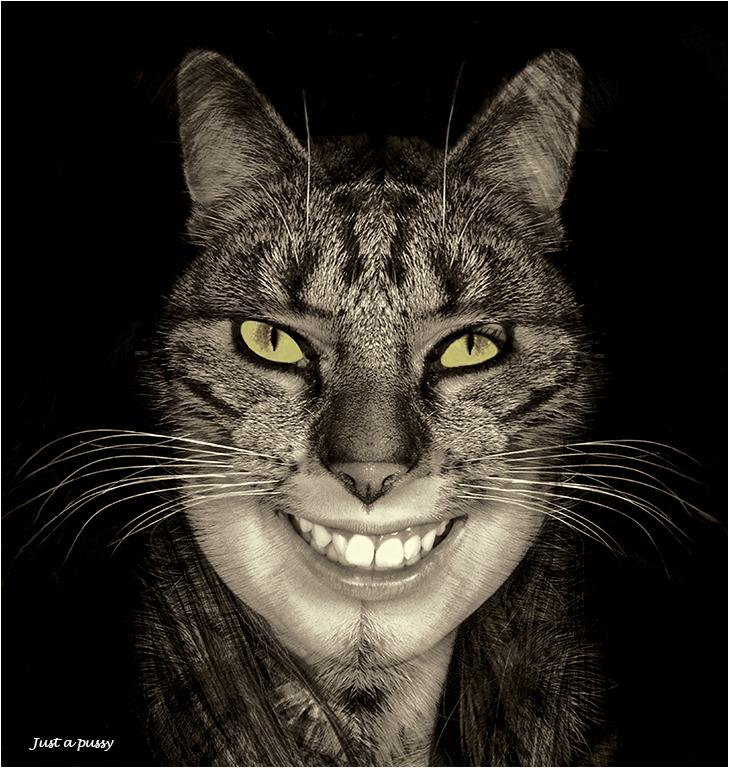 feline-beauty_mal_adv